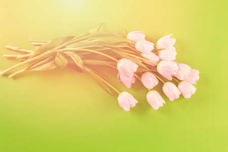 Bouquet of pink tulips on a green background. Imagens - 73425585
