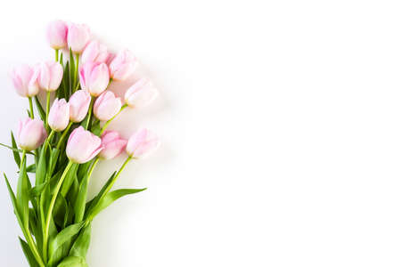 Bouquet of pink tulips on a white background.