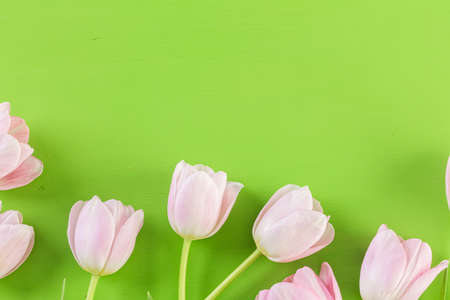 Bouquet of pink tulips on a green background. Reklamní fotografie