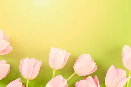 Bouquet of pink tulips on a green background. Imagens