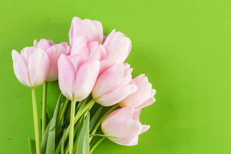 Bouquet of pink tulips on a green background. Imagens - 73425408