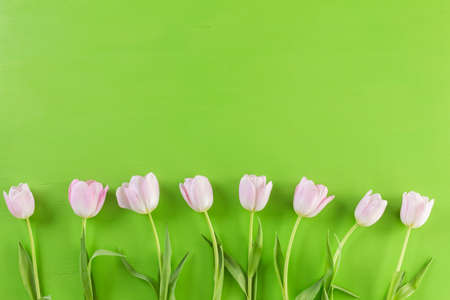 Bouquet of pink tulips on a green background. Stock Photo
