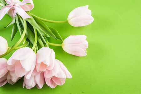 Light pink tulips on a green background. Stock Photo