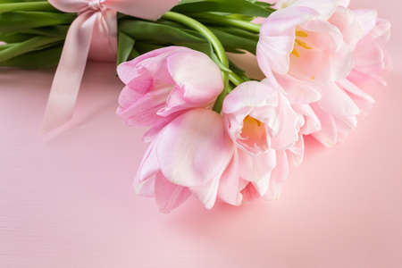 Light pink tulips on a pink background. Banco de Imagens