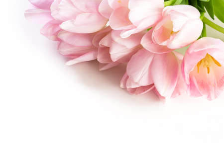 Light pink tulips on a white background. Banco de Imagens