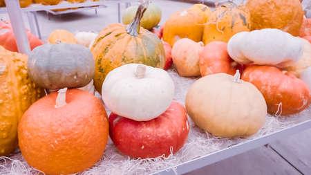 Variety of pumpkins in garden center.