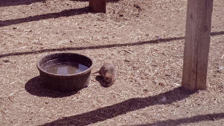 Field mouse on urban farm. Standard-Bild - 113269952