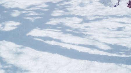 Tree shadows on Spring snow.