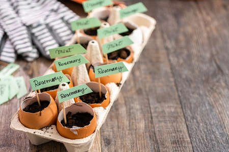 Plantings seeds in eggshells and labeling them with small plant tags. Standard-Bild - 121188566