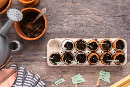 Flat lay. Plantings seeds in eggshells and labeling them with small plant tags. Standard-Bild - 121188571