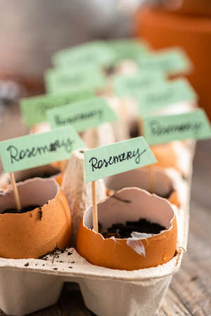 Plantings seeds in eggshells and labeling them with small plant tags. Standard-Bild - 121188977