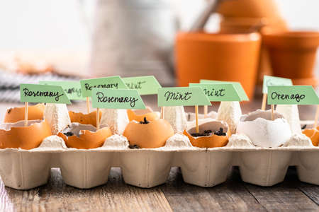 Plantings seeds in eggshells and labeling them with small plant tags. Standard-Bild - 121218317