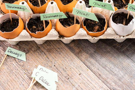 Plantings seeds in eggshells and labeling them with small plant tags. Standard-Bild - 121218321