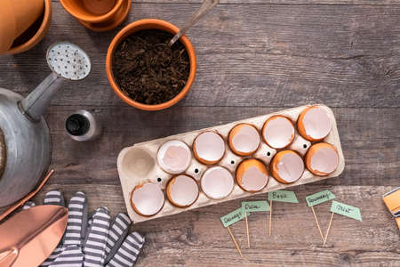 Flat lay. Plantings seeds in eggshells and labeling them with small plant tags. Standard-Bild - 121216424