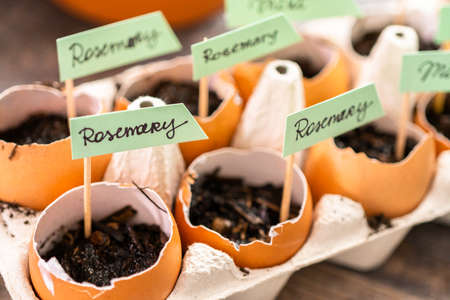 Plantings seeds in eggshells and labeling them with small plant tags. Standard-Bild - 121216432