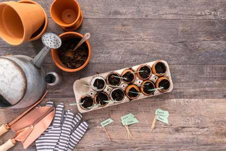 Flat lay. Plantings seeds in eggshells and labeling them with small plant tags. Standard-Bild - 121218291