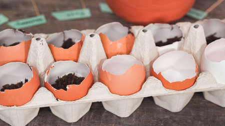 Step by step. Plantings seeds in eggshells and labeling them with small plant tags. Standard-Bild - 122377000