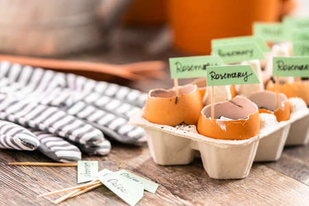 Plantings seeds in eggshells and labeling them with small plant tags. Standard-Bild - 122377018