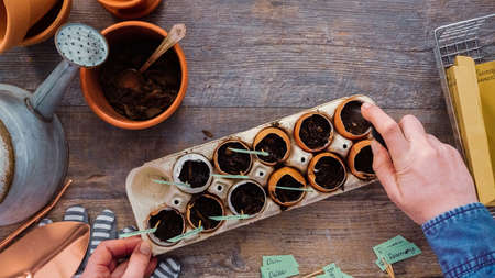 Flat lay. Step by step. Plantings seeds in eggshells and labeling them with small plant tags. Standard-Bild - 122377020