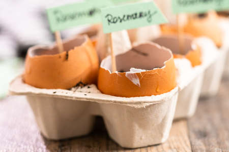 Plantings seeds in eggshells and labeling them with small plant tags. 스톡 콘텐츠