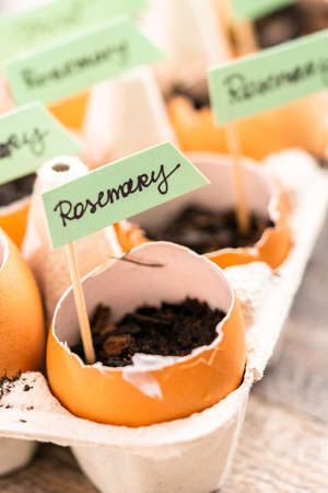 Plantings seeds in eggshells and labeling them with small plant tags. Standard-Bild - 122377460