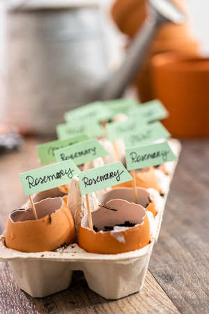 Plantings seeds in eggshells and labeling them with small plant tags. Standard-Bild - 122377537