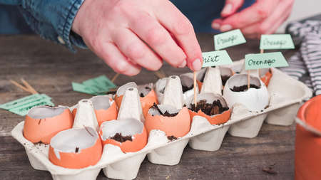 Step by step. Plantings seeds in eggshells and labeling them with small plant tags.