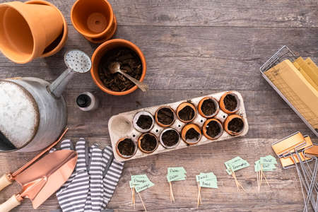 Flat lay. Plantings seeds in eggshells and labeling them with small plant tags. Standard-Bild - 126593535