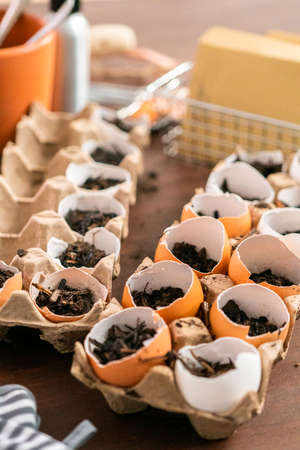 Starting seeds in eggshells for Spring planting.
