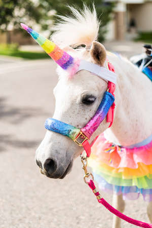 A white pony decorated as a unicorn at the little girl birthday party.