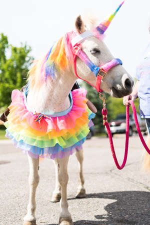 A white pony decorated as a unicorn at the little girl birthday party. Imagens