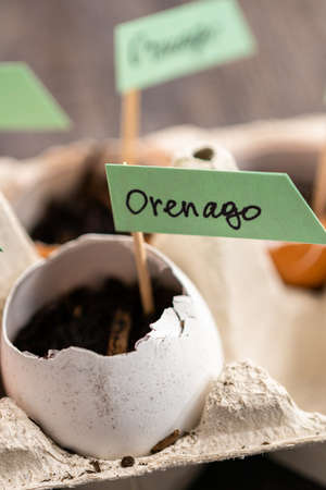 Plantings seeds in eggshells and labeling them with small plant tags. Standard-Bild - 126593683