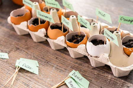 Plantings seeds in eggshells and labeling them with small plant tags. Banco de Imagens