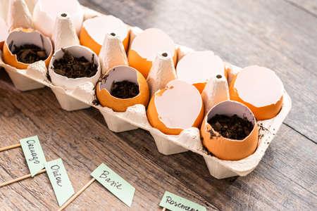 Plantar semillas en cáscaras de huevo y etiquetarlas con pequeñas etiquetas de plantas. Foto de archivo