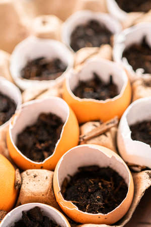 Starting seeds in eggshells for Spring planting.