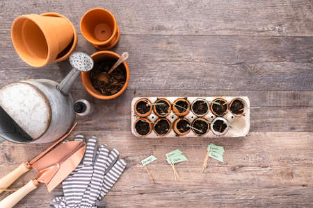 Flat lay. Plantings seeds in eggshells and labeling them with small plant tags. Standard-Bild - 126594007