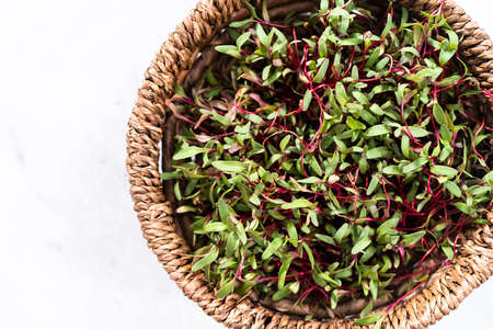 Radish microgreens with purple stems and green leaves in the basket.