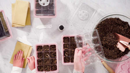 Flat lay. Little girl helping planting seeds in seed propagator with soil.