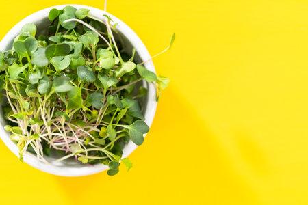 Flat lay. Freshly harvested radish microgreens in a bowl.