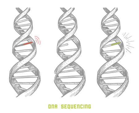 Sekwencjonowanie genomu. Sekwencjonowanie DNA. ręcznie rysowane Dna. Informacje o genomie w życiu człowieka. pojęcie.