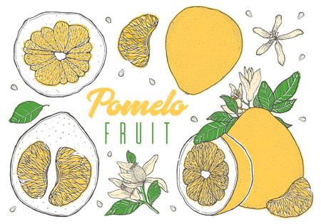 Set colorful hand drawn pomelo fruit. Vintage sketch. Sliced cut half element. Vector illustration.