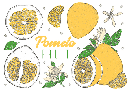 Set colorful hand drawn pomelo fruit. Vintage sketch. Sliced cut half element. Vector illustration.