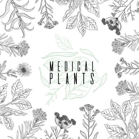 Vector background frame with drawing wild plants, herbs and flowers, monochrome botanical illustration in vintage style, natural floral template. Anis, arnica, rosemary, heliehrysum, beech, aloe. Banque d'images - 104513661