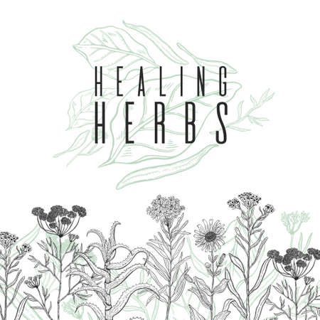 Vector background frame with drawing wild plants, herbs and flowers, monochrome botanical illustration in vintage style, natural floral template. Anis, arnica, rosemary, heliehrysum, beech, aloe.