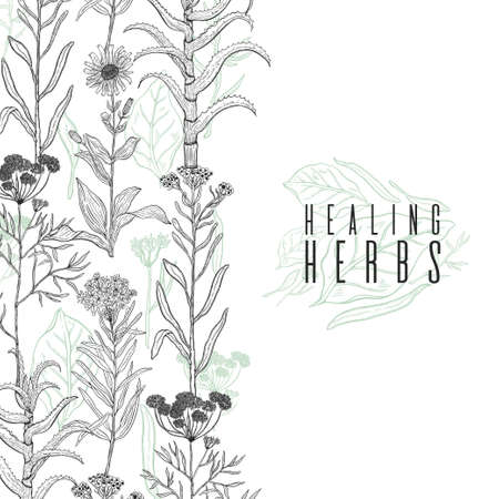 Vector background frame with drawing wild plants, herbs and flowers, monochrome botanical illustration in vintage style, natural floral template. Anis, arnica, rosemary, heliehrysum, beech, aloe. Banque d'images - 114983536
