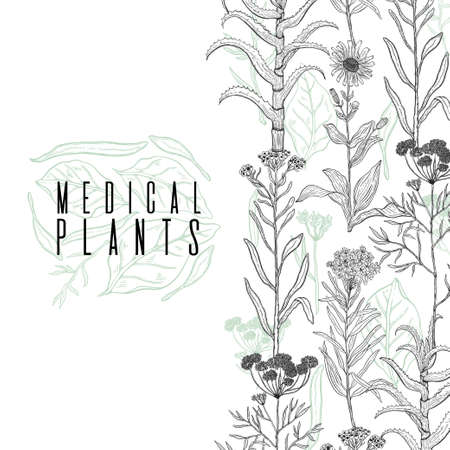 Vector background frame with drawing wild plants, herbs and flowers, monochrome botanical illustration in vintage style, natural floral template. Anis, arnica, rosemary, heliehrysum, beech, aloe. Banque d'images - 114983538