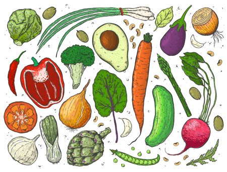 Vektor großer Satz Gemüse in einem realistischen Skizzenstil. Gesundes Essen, Naturprodukt, Gemüsefarm, veganes Essen, Sporternährung. Weinleseillustration.