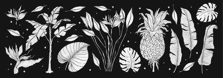 Tropical plant nature set.Line art hand drawn set. Palm tree jungle floral.Vector illustration. Illusztráció