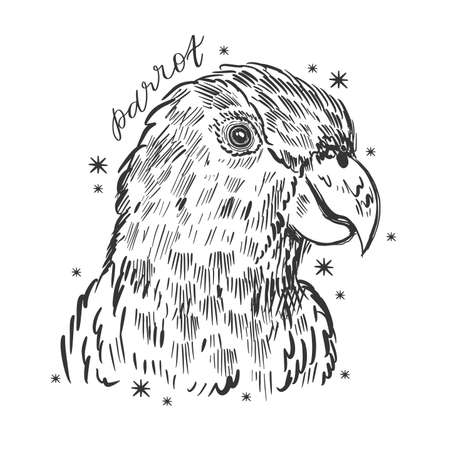 Parrot bird hand drawn sketch. Cute tropical design. Vecteurs