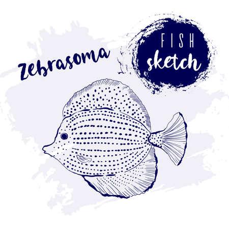 Vintage fish zebrasoma marine sketch.Retro line style.Hand drawn underwater.